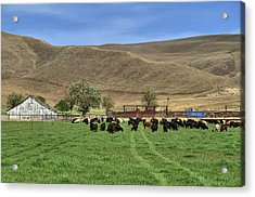 Acrylic Print featuring the photograph Spring Grazing by Donna Kennedy