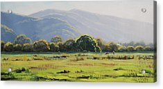 Spring Grazing Tumut Australia Acrylic Print