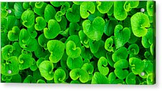 Spring Green Acrylic Print by Leah Dore
