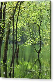 Spring Green  Acrylic Print by Lori Frisch