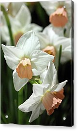 Spring Has Spring Acrylic Print by Mary Haber
