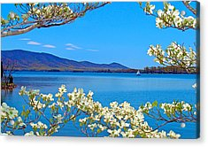 Spring Has Sprung 2 Smith Mountain Lake Acrylic Print