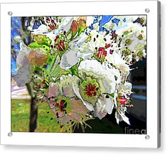 Spring Has Sprung Acrylic Print by Deborah Nakano
