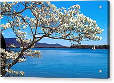 Spring Has Sprung Smith Mountain Lake Acrylic Print