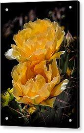 Spring In Arizona Acrylic Print
