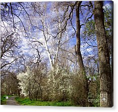 Spring In Bidwell Park Acrylic Print