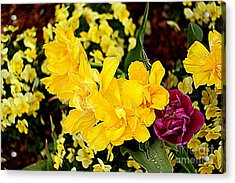 Acrylic Print featuring the photograph Spring In Dallas by Diana Mary Sharpton