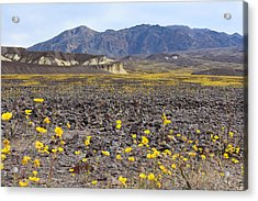 Spring In Death Valley Acrylic Print by Dung Ma