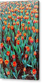 Spring In Holland Acrylic Print by Ian Gledhill
