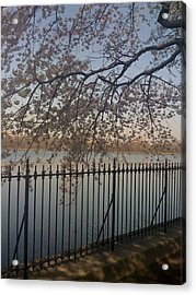 Spring In New York City Acrylic Print by Wendy Uvino