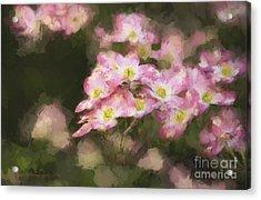Spring In Pink Acrylic Print by Linda Blair