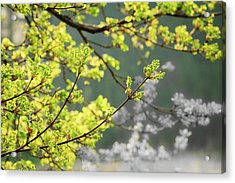 Spring In The Arboretum Acrylic Print by Joni Eskridge
