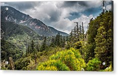 Spring In The Forest Acrylic Print by Joseph Hollingsworth