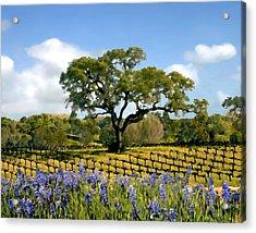 Spring In The Vineyard Acrylic Print by Kurt Van Wagner