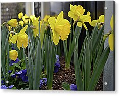 Spring In Yellow Acrylic Print by Larry Bishop
