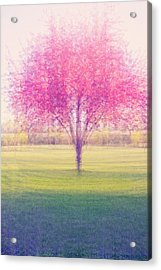 Spring Is A Blur Acrylic Print