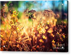 Spring Is A New Beginning Acrylic Print