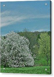 Spring Is Here Acrylic Print by Debra     Vatalaro