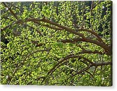 Spring Is Here Acrylic Print by Yoel Koskas