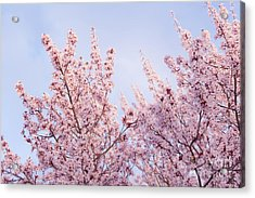 Acrylic Print featuring the photograph Spring Is In The Air by Ana V Ramirez