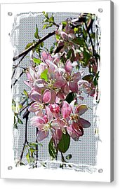 Spring Is Melting Away Acrylic Print by Carol Groenen