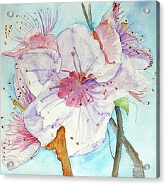 Spring Acrylic Print by Jasna Dragun