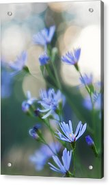 Spring Acrylic Print by Kate Livingston
