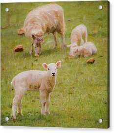 Acrylic Print featuring the photograph Spring Lamb by Bellesouth Studio
