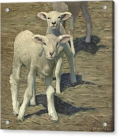 Spring Lambs Brothers Acrylic Print
