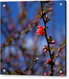 Acrylic Print featuring the photograph Spring by Lora Lee Chapman