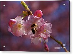 Acrylic Print featuring the photograph Spring by Louise Fahy