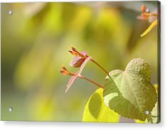 Acrylic Print featuring the photograph Spring Macro2 by Jeff Burgess