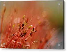 Acrylic Print featuring the photograph Spring Macro3 by Jeff Burgess