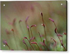 Acrylic Print featuring the photograph Spring Macro5 by Jeff Burgess