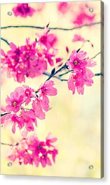 Acrylic Print featuring the photograph Spring Magic by Julie Andel