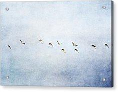 Spring Migration 2 - Textured Acrylic Print