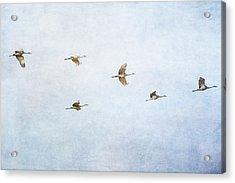 Spring Migration 4 - Textured Acrylic Print