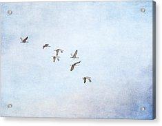 Spring Migration - Textured Acrylic Print