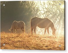 Acrylic Print featuring the photograph Spring Morning In The Ozarks by Allin Sorenson