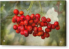 Spring Mountain Ash Berries  Acrylic Print