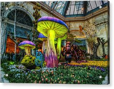 Spring Mushrooms Acrylic Print by Stephen Campbell