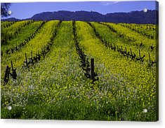 Spring Mustard Field Acrylic Print by Garry Gay