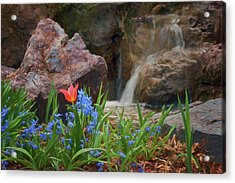 Acrylic Print featuring the photograph Spring  by Nikolyn McDonald