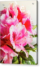 Spring Of Flower Bouquets Acrylic Print