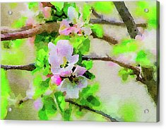 Spring On A Branch Acrylic Print