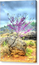 Spring On Devils Den Acrylic Print by Paul W Faust - Impressions of Light