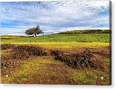 Acrylic Print featuring the photograph Spring On North Table Mountain by James Eddy
