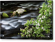 Acrylic Print featuring the photograph Spring On The Oconaluftee River - D009923 by Daniel Dempster