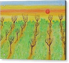 Spring Orchard Sunset Acrylic Print