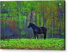 Spring Pasture Acrylic Print by JAMART Photography